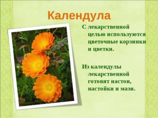 Календула С лекарственной целью используются цветочные корзинки и цветки. Из
