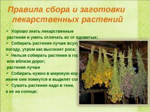 Хорошо знать лекарственные растения и уметь отличать их от ядовитых; Собирать