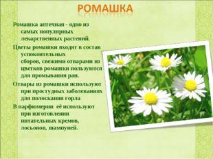 Ромашка аптечная - одно из самых популярных лекарственных растений. Цветы ром