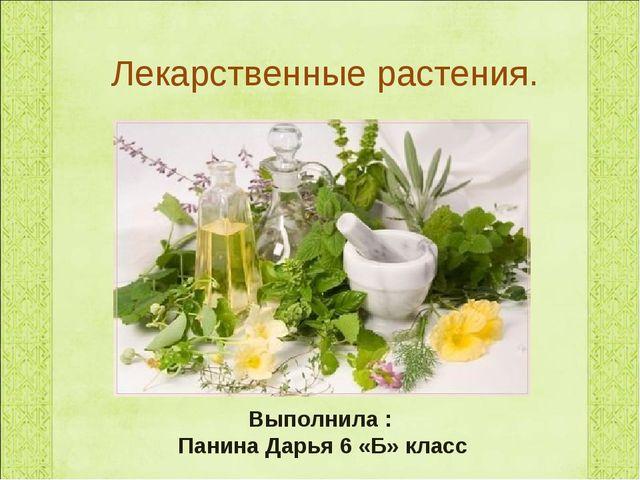 Лекарственные растения. Выполнила : Панина Дарья 6 «Б» класс