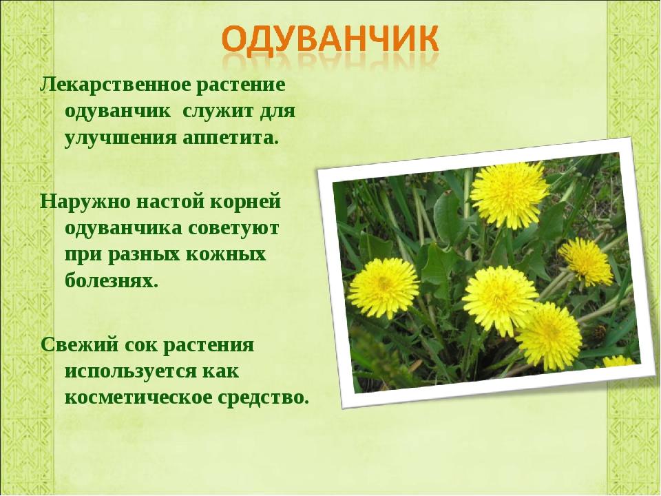 Лекарственное растение одуванчик служит для улучшения аппетита. Наружно насто...