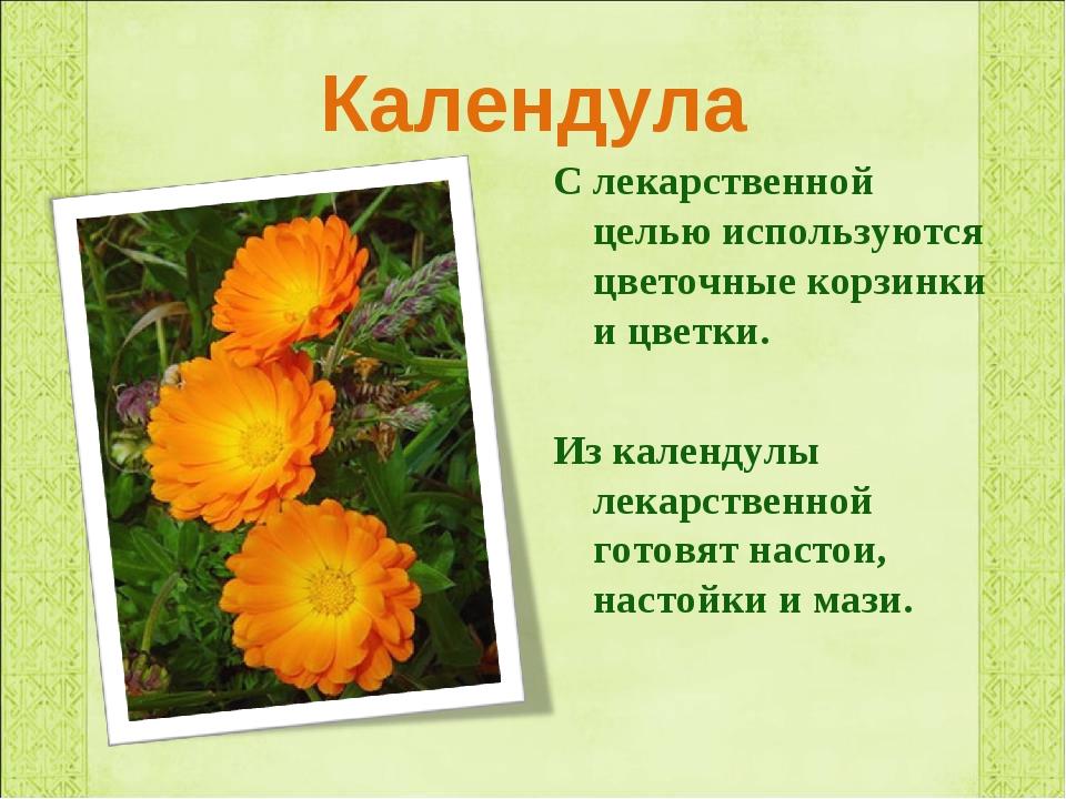 Календула С лекарственной целью используются цветочные корзинки и цветки. Из...