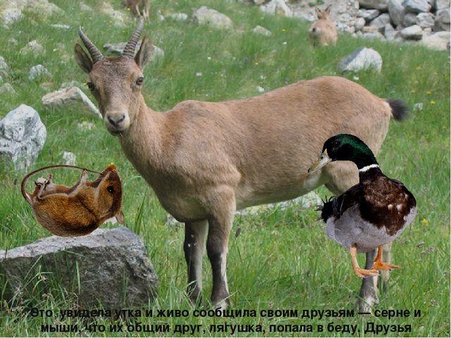 Это увидела утка и живо сообщила своим друзьям — серне и мыши, что их общий...