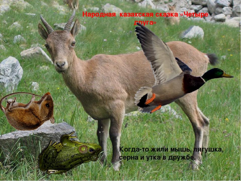 Народная казахская сказка «Четыре друга» Когда-то жили мышь, лягушка, серна и...