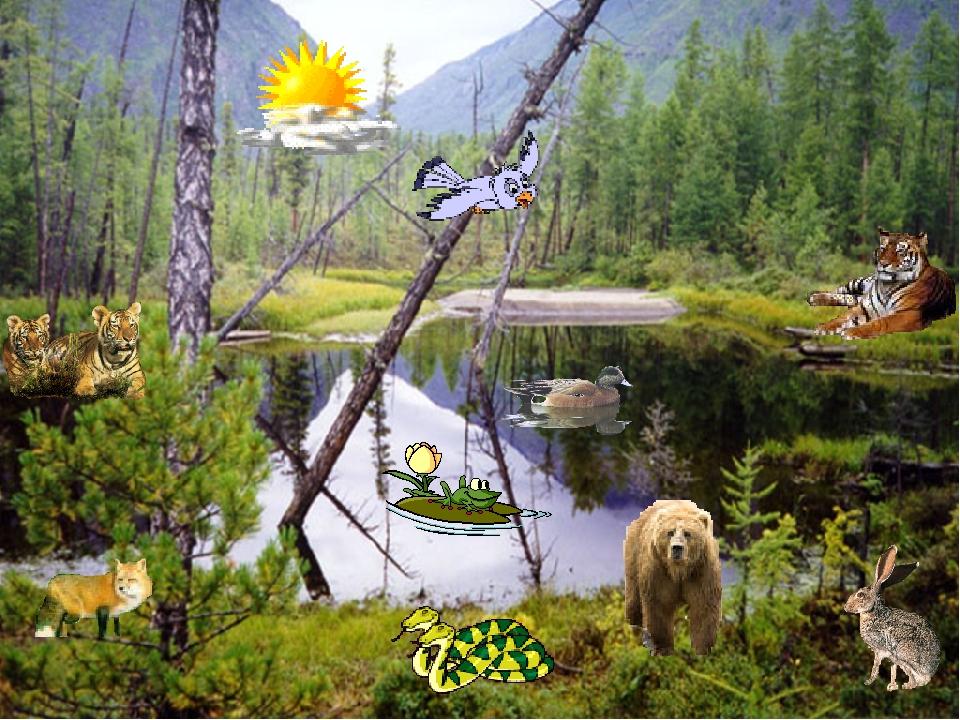 Тихо и чудно в лесу вековом