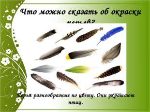 Что можно сказать об окраски перьев? Перья разнообразные по цвету. Они украша