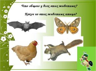 Что общего у всех этих животных? Какое из этих животных птица? Что общего у в