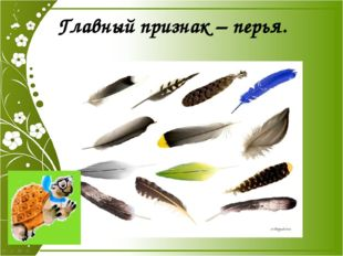 Главный признак – перья. Главный признак – перья.