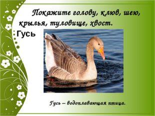 Покажите голову, клюв, шею, крылья, туловище, хвост. Гусь Гусь – водоплавающ