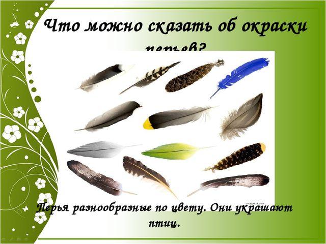 Что можно сказать об окраски перьев? Перья разнообразные по цвету. Они украша...