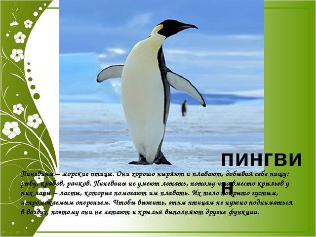 Скажи ты мне, Какой чудак И днём и ночью Носит фрак. пингвин Пингвины – морс...
