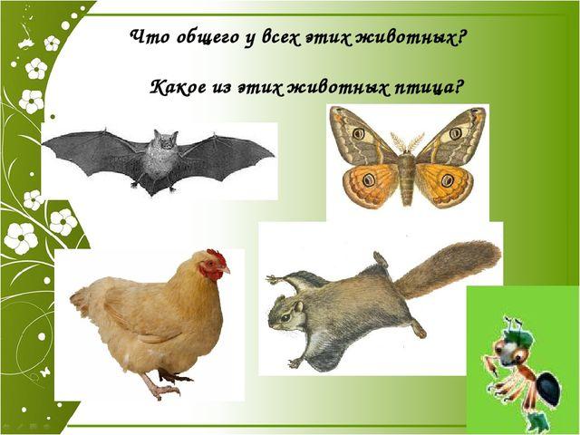 Что общего у всех этих животных? Какое из этих животных птица? Что общего у в...