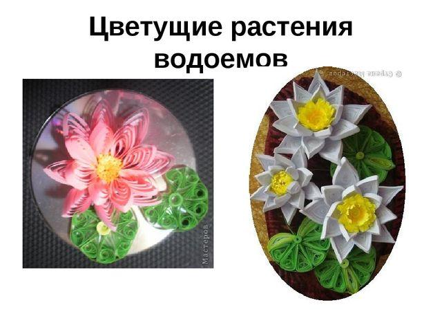 Цветущие растения водоемов