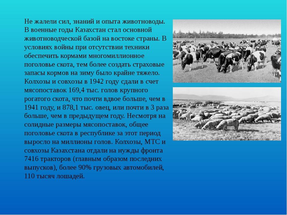 Не жалели сил, знаний и опыта животноводы. В военные годы Казахстан стал осно...