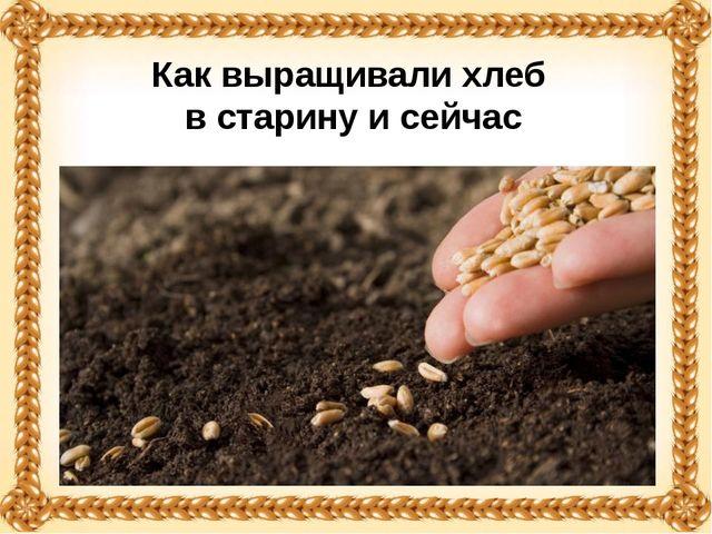 Как выращивали хлеб в старину и сейчас