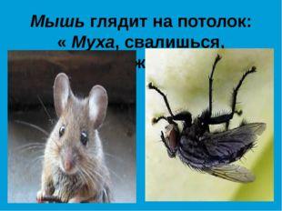 Мышь глядит на потолок: « Муха, свалишься, дружок!»
