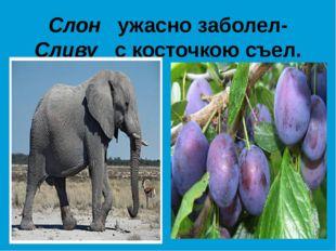 Слон ужасно заболел- Сливу с косточкою съел.
