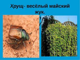Хрущ- весёлый майский жук. Хмель ползёт на шест без рук.