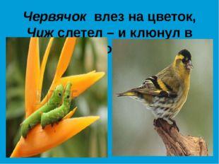 Червячок влез на цветок, Чиж слетел – и клюнул в бок!