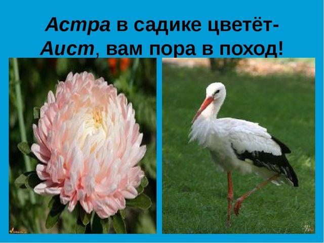 Астра в садике цветёт- Аист, вам пора в поход!