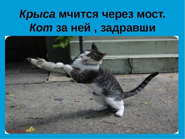 Крыса мчится через мост. Кот за ней , задравши хвост.