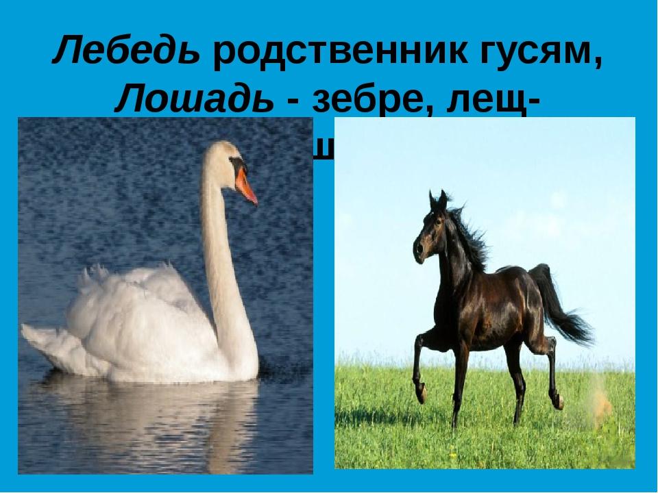 Лебедь родственник гусям, Лошадь - зебре, лещ- ершам.