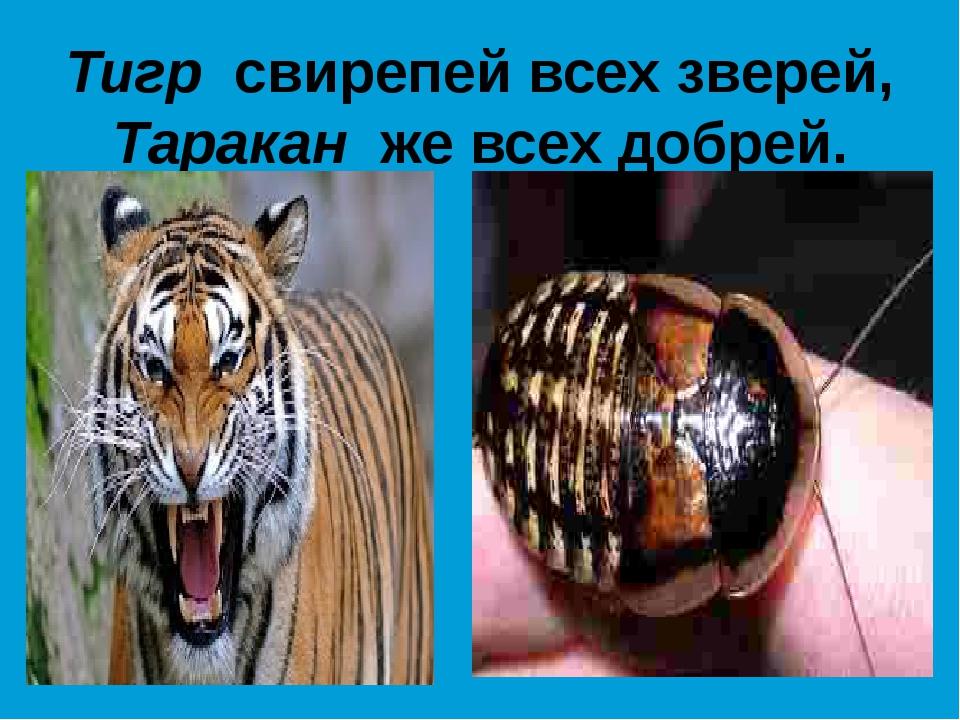 Тигр свирепей всех зверей, Таракан же всех добрей.