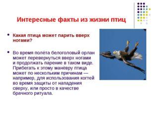 Интересные факты из жизни птиц Какая птица может парить вверх ногами? Во врем