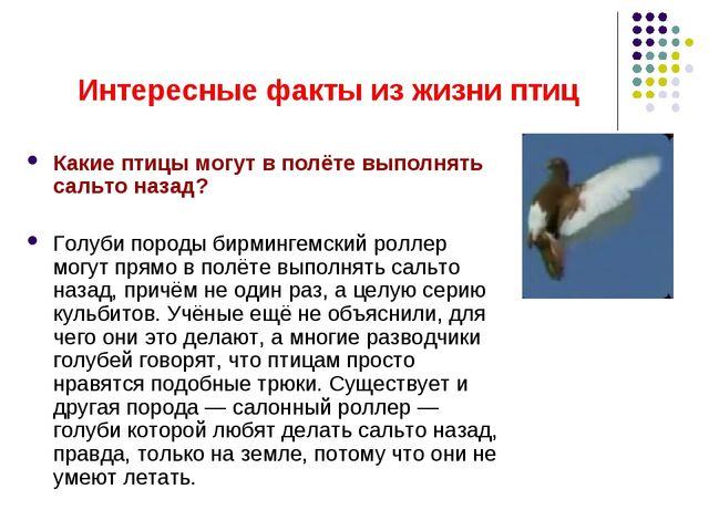 Интересные факты из жизни птиц Какие птицы могут в полёте выполнять сальто на...