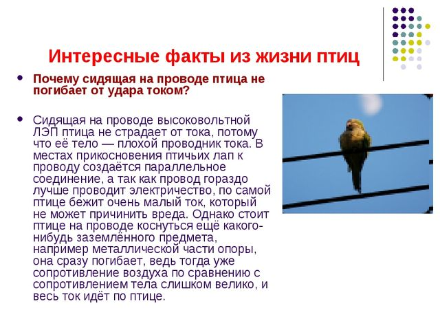 Интересные факты из жизни птиц Почему сидящая на проводе птица не погибает от...