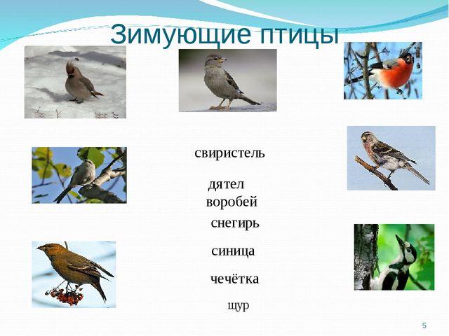 Зимующие птицы свиристель дятел воробей снегирь синица чечётка щур *