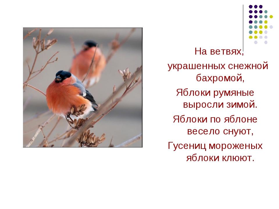 На ветвях, украшенных снежной бахромой, Яблоки румяные выросли зимой. Яблоки...