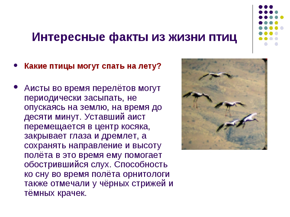 Интересные факты из жизни птиц Какие птицы могут спать на лету? Аисты во врем...