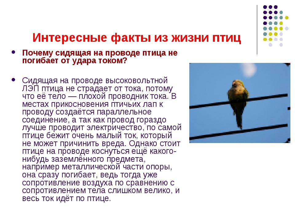 Почему не убивает током птиц на проводах