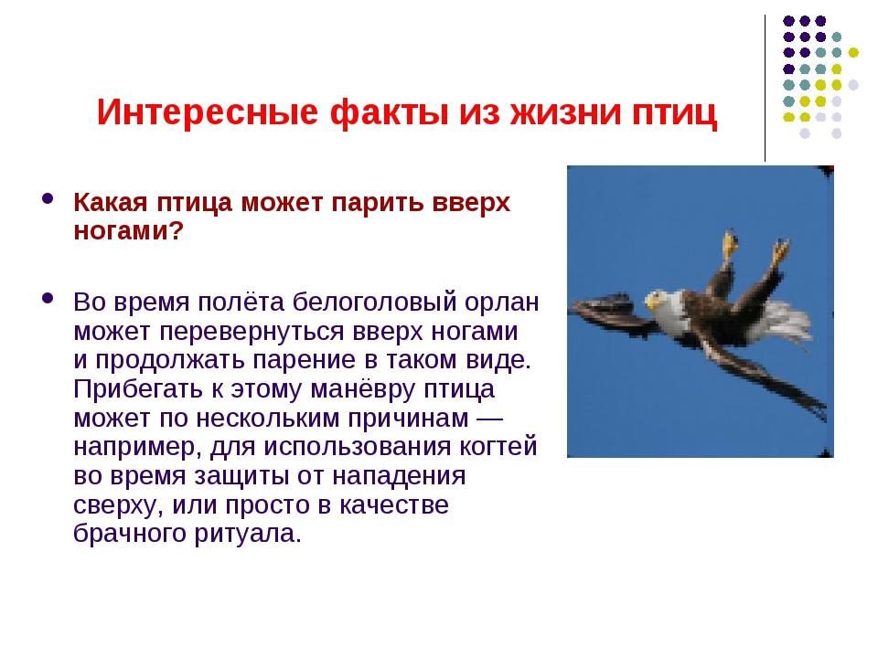 Интересные факты из жизни птиц Какая птица может парить вверх ногами? Во врем...