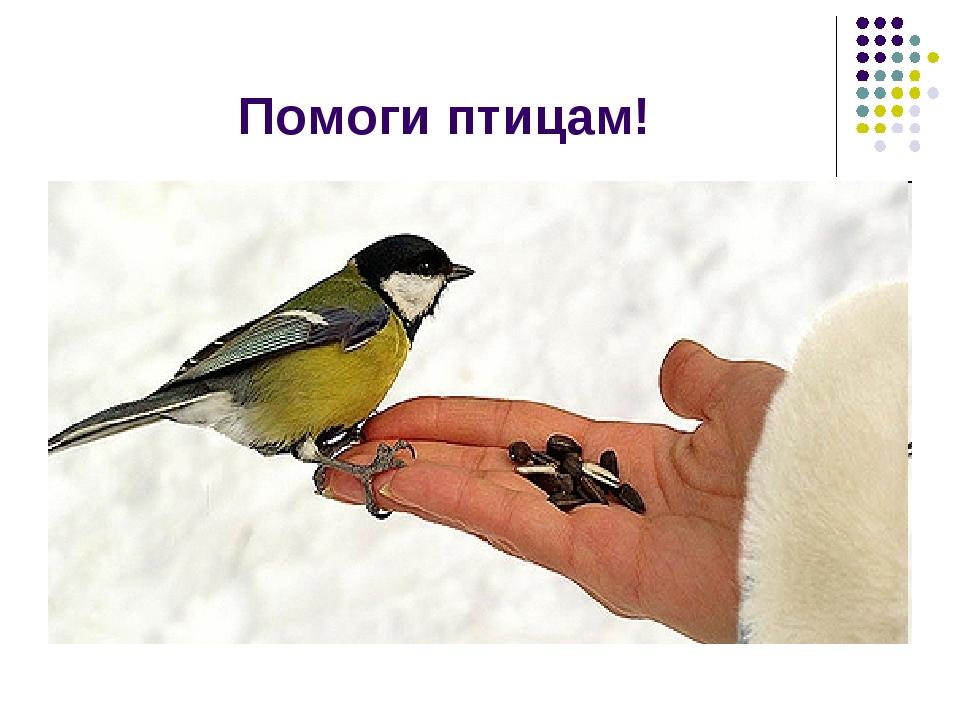 Помоги птицам!