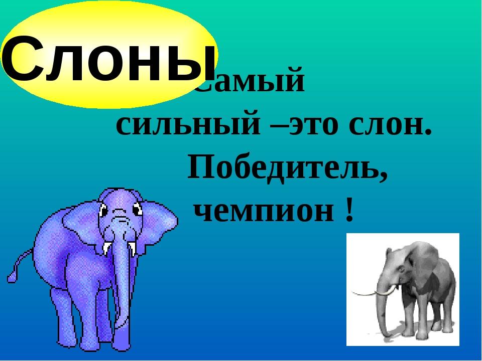Самый сильный –это слон. Победитель, чемпион ! Слоны