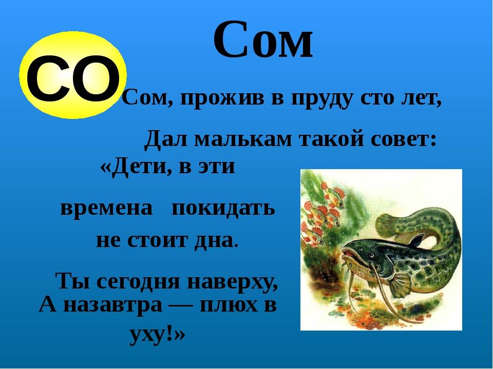 Cом Сом, прожив в пруду сто лет, Дал малькам такой совет: «Дети, в эти времен...