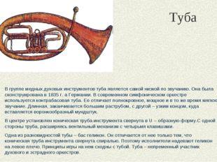 Туба В группе медных духовых инструментов туба является самой низкой по звуча