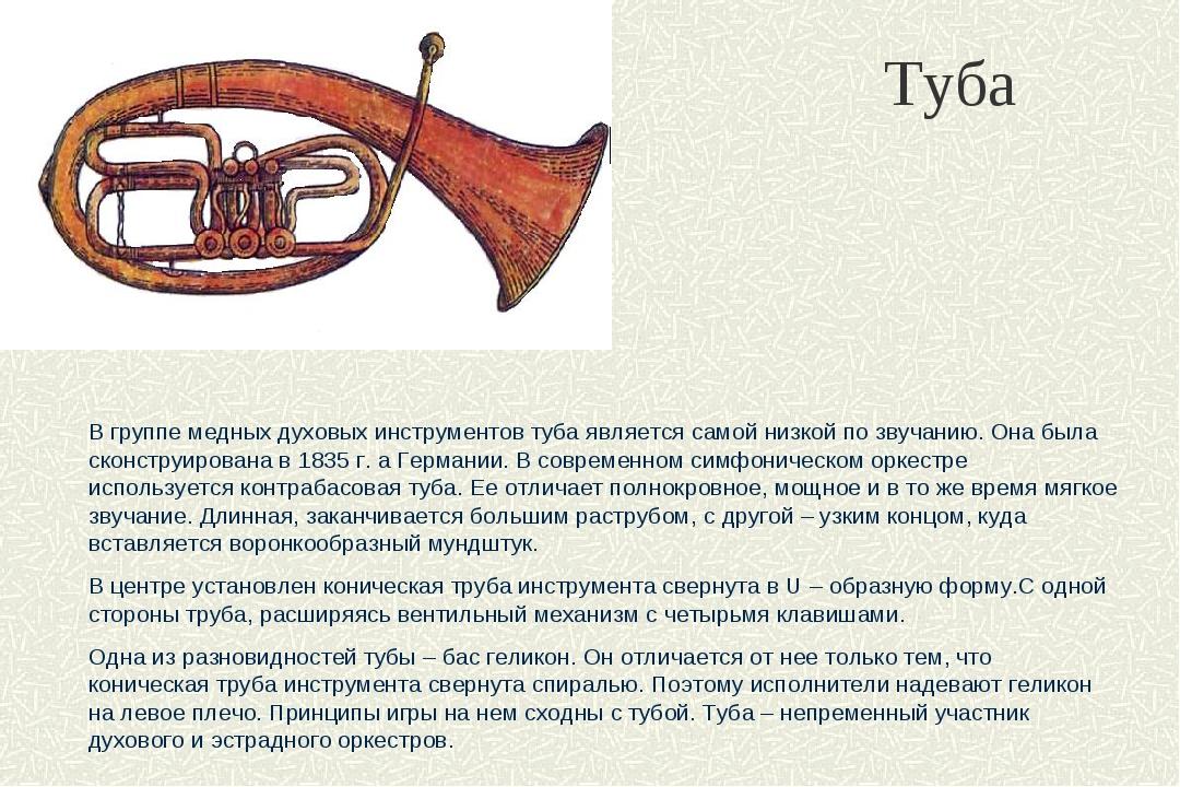 Туба В группе медных духовых инструментов туба является самой низкой по звуча...