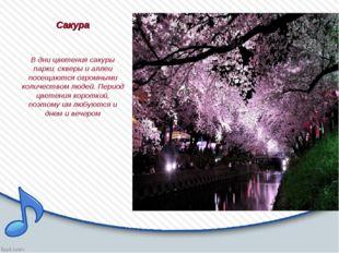 Сакура В дни цветения сакуры парки, скверы и аллеи посещаются огромными колич