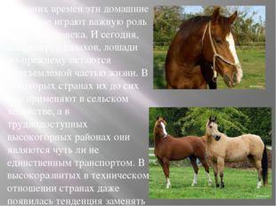 С давних времен эти домашние животные играют важную роль в жизни человека. И