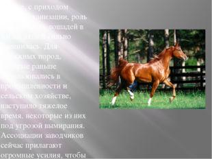 Все же, с приходом эпохи механизации, роль и значимость лошадей в жизни людей