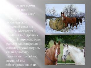 В настоящее время лошади и пони используются чаще всего для любительской верх