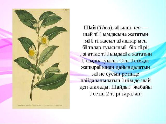 Шай(Thea),ағылш.tea— шай тұқымдасына жататын мәңгі жасыл ағаштар мен бұта...