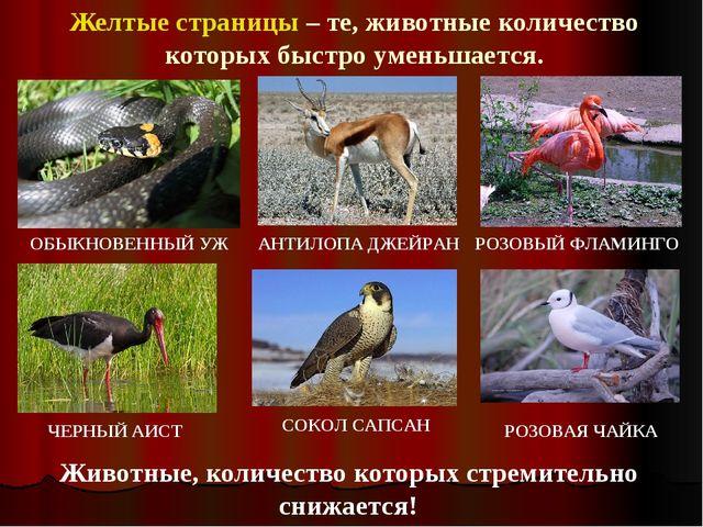 Желтые страницы – те, животные количество которых быстро уменьшается. Животны...