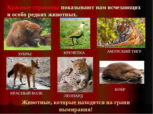 Красные страницы показывают нам исчезающих и особо редких животных. Животные,...