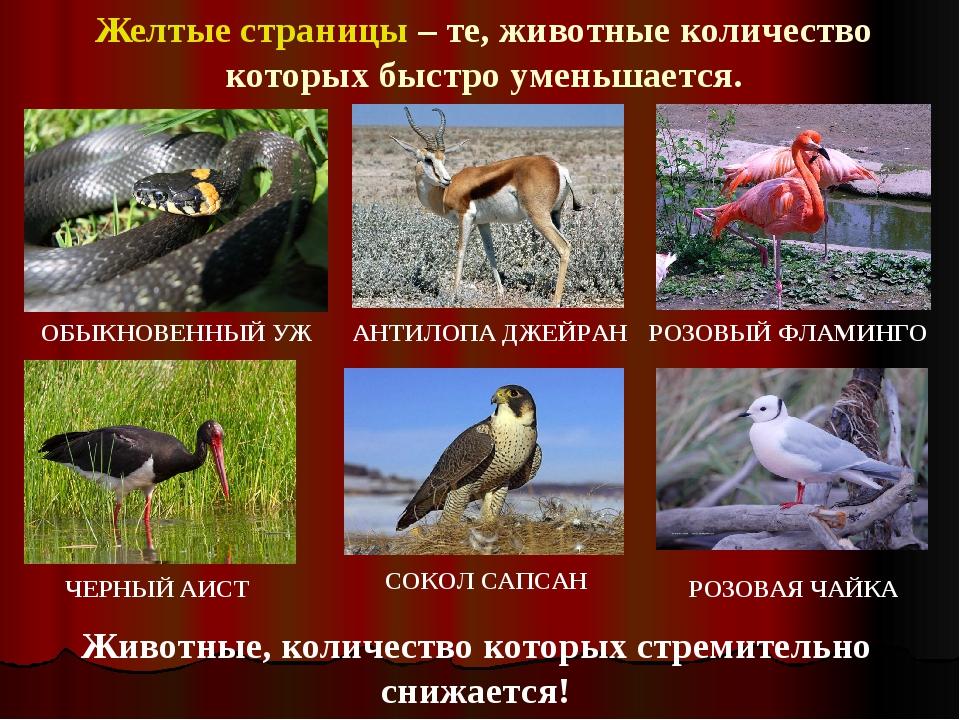 Птицы с красным клювом и лапами фото пока