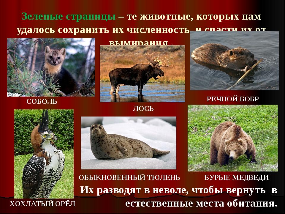 Зеленые страницы – те животные, которых нам удалось сохранить их численность,...