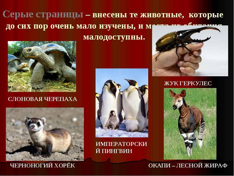Серые страницы – внесены те животные, которые до сих пор очень мало изучены,...
